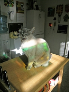 rose-rainbow-meow