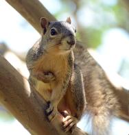 sincere squirrel