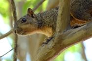 squirrel eye on seeds