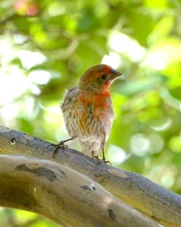 sunday bird 01