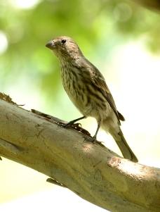 sunday bird 02