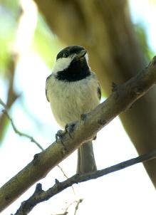 sunday bird 03