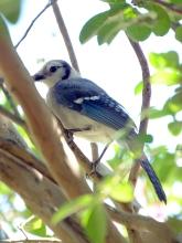 sunday bird 04