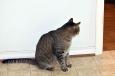 bubba waiting to ambush