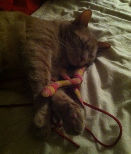 sleepy cat snake