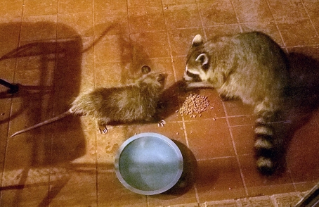 possum coon dinner party